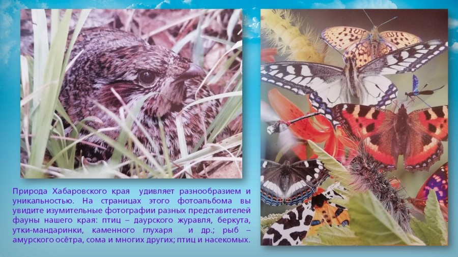 b_900_506_16777215_00_images_Exhibitions_Far_east_nature_secrets_hab_krai_albums_slide_13.jpg