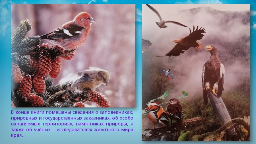 b_900_506_16777215_00_images_Exhibitions_Far_east_nature_secrets_hab_krai_albums_slide_14.jpg