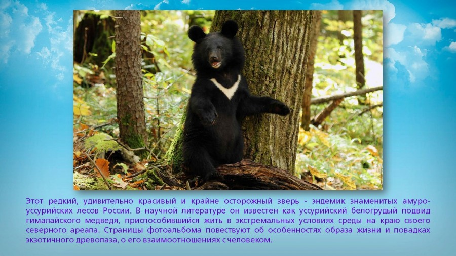 b_900_506_16777215_00_images_Exhibitions_Far_east_nature_secrets_hab_krai_albums_slide_18.jpg